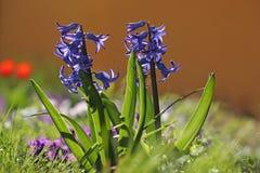 Le ressort coloré fleurit le fond Images libres de droits