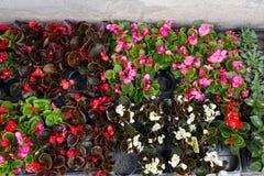 Le ressort coloré fleurit sur le marché de fleur, Rome Italie, ressort Image stock