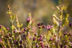 Le ressort commence par des fleurs photographie stock libre de droits