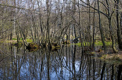 Le ressort dans le marais Photographie stock