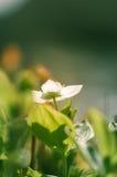 Le ressort de floraison fleurissent dans le paysage vert par la Norvège Images stock