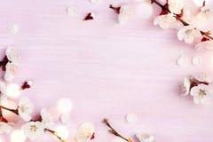 Le ressort de floraison fleurit sur le fond en bois rose avec l'espace de copie photos stock
