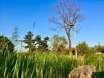 Le ressort de Qingdao image stock
