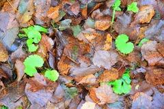 Le ressort est automne Image stock