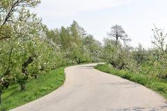 Le ressort est dans le ciel : arbres fruitiers de floraison le long d'une digue images stock