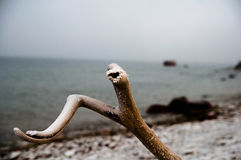 Le ressort est soulevé en falaises de Pakri Photographie stock