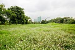 Le ressort et l'été wallpaper avec l'herbe verte et le petit flo blanc Photos stock