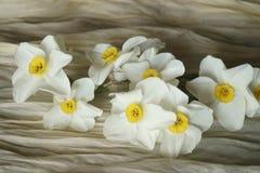 Le ressort fleurit - le beau bouquet des jonquilles blanches Images libres de droits