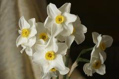 Le ressort fleurit - le beau bouquet des jonquilles blanches Photos libres de droits