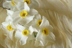Le ressort fleurit - le beau bouquet des jonquilles blanches Photographie stock