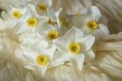 Le ressort fleurit - le beau bouquet des jonquilles blanches Photo libre de droits