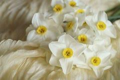 Le ressort fleurit - le beau bouquet des jonquilles blanches Photos stock