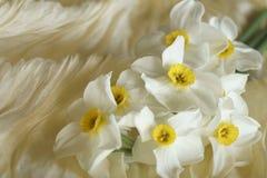 Le ressort fleurit - le beau bouquet des jonquilles blanches Image stock