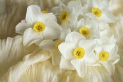 Le ressort fleurit - le beau bouquet des jonquilles blanches Images stock
