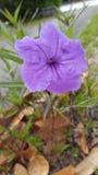 Le ressort fleurit des couleurs Photographie stock