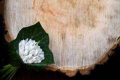 Le ressort fleurit, des perce-neige jour du ` s de femmes du 8 mars image libre de droits