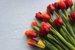 Le ressort fleurit des tulipes sur un fond bleu 8 mars, jour international du ` s de femmes, jour du ` s de mère ou anniversaire Photos libres de droits