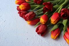 Le ressort fleurit des tulipes sur un fond bleu 8 mars, jour international du ` s de femmes, jour du ` s de mère ou anniversaire Photos stock