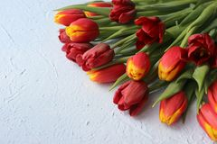 Le ressort fleurit des tulipes sur un fond bleu 8 mars, jour international du ` s de femmes, jour du ` s de mère ou anniversaire Image libre de droits