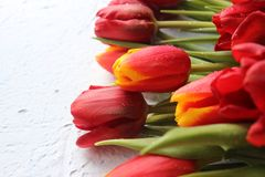 Le ressort fleurit des tulipes sur une table texturisée en pierre 8 mars, jour international du ` s de femmes, jour du ` s de mèr Images libres de droits