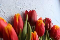 Le ressort fleurit des tulipes sur une table texturisée en pierre 8 mars, jour international du ` s de femmes, jour du ` s de mèr Photo stock
