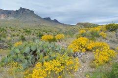 Le ressort fleurit en parc national de grande courbure, le Texas Photos libres de droits