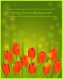 Le ressort fleurit l'illustration de vecteur de tulipes Photos stock