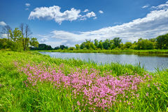 Le ressort fleurit la campagne de nuages de ciel bleu de paysage de rivière Photographie stock