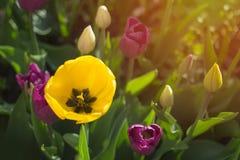 Le ressort fleurit le concept lumineux et spirituel avec la lumière et le soleil lumineux de matin Image stock