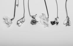 Le ressort fleurit - le narcisse, freesia, à l'arrière-plan blanc Photo stock