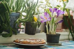 Le ressort fleurit les crocus et le gâteau pourpres sur une table par la fenêtre Photo libre de droits