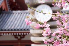 """Le ressort japonais représentent avec un  de fleurs de cerisier ou d'""""Sakura†dans le ciel d'espace libre de matin Image libre de droits"""