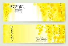 Le ressort jaune de mimosa fleurit la guirlande verticale sur le fond blanc Photo stock