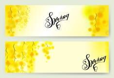 Le ressort jaune de mimosa fleurit la guirlande verticale sur le fond blanc Photos libres de droits