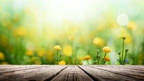 Le ressort jaune fleurit le fond photos libres de droits