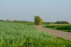 Le ressort met en place le paysage de panorama avec l'herbe verte fraîche et l'APPL Images stock