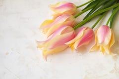 Le ressort minimalistic tendre fleurit la composition sur la surface de texture Belle décoration féminine d'usine pour la carte d photo stock