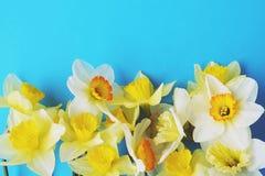Le ressort minimalistic tendre fleurit la composition sur la surface de texture Belle décoration féminine d'usine pour la carte d Photographie stock libre de droits