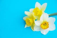 Le ressort minimalistic tendre fleurit la composition sur la surface de texture Belle décoration féminine d'usine pour la carte d Photos libres de droits