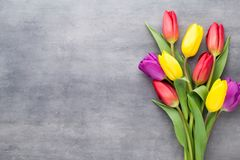 Le ressort multicolore fleurit, tulipe sur un fond gris photo stock