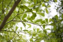 Le ressort vert part du fond Photos stock