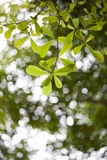 Le ressort vert part du fond Images stock