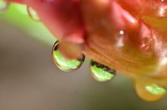 Le reste des gouttes de pluie qui collent et accrochent sur les fleurs et les feuilles photographie stock libre de droits
