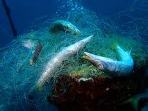 Le reti del fantasma sono reti di pesca professionale che sono state perse, abbandonato state, o sono scartato state in mare fotografia stock libera da diritti
