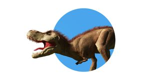Le rex de tyrannosaure, se ferment vers le haut du dinosaure de T-rex regardant par le mur 3d rendent d'isolement sur le fond bla Image libre de droits
