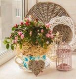 Le rhododendron d'azalée dans le pot de vintage avec des autocollants de décor appareillent o Photos stock