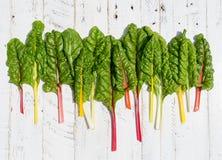 Le ricette piane di dieta sana della bietola svizzera dell'arcobaleno di disposizione deridono su bianco Fotografie Stock