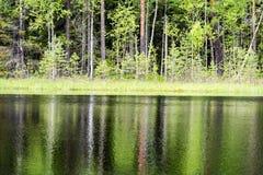 le riflessioni degli alberi nel lago innaffiano nel sole luminoso di mezzogiorno Immagini Stock Libere da Diritti