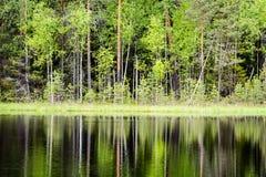 le riflessioni degli alberi nel lago innaffiano nel sole luminoso di mezzogiorno Immagine Stock Libera da Diritti