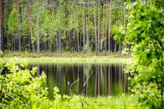 le riflessioni degli alberi nel lago innaffiano nel sole luminoso di mezzogiorno Fotografia Stock